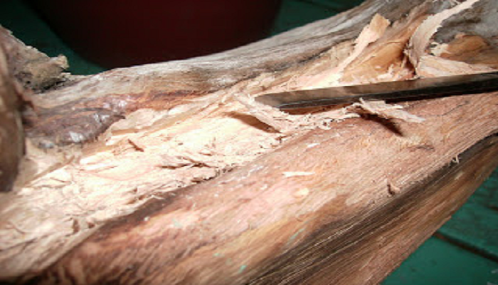 como preparar la madera en el tanuki bonsai 2