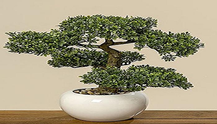 donde comprar un bonsai artificial