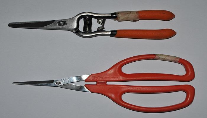 herramientas bonsai podadora puntiaguda