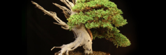 Tanuki bonsái
