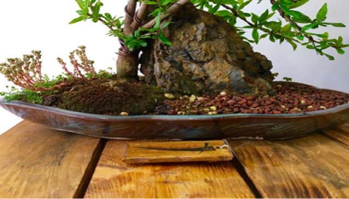 abonado en bonsai granado