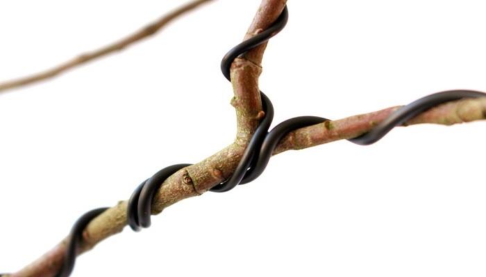 alambrado bonsai granado