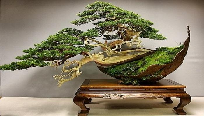 formas y estilos de bonsai japones