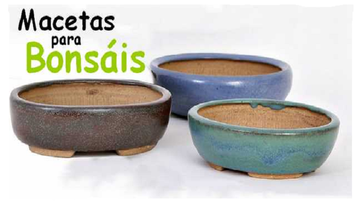 macetas bonsai carmona