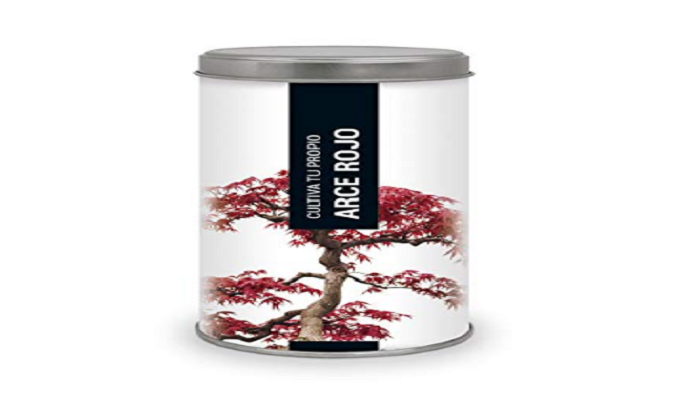 semillas de acer palmatum bonsai