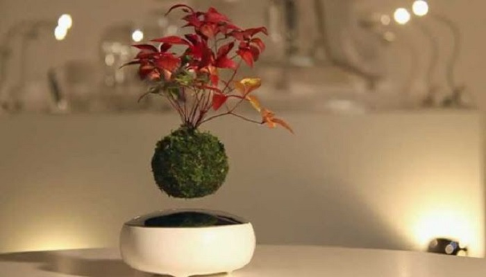 air bonsai bonsais flotantes