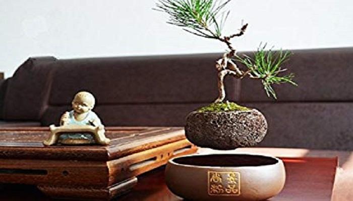 air bonsai o estrella flotante
