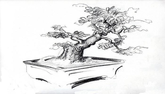bonsai dibujo artistico