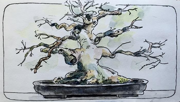 bonsai dibujo caricatura