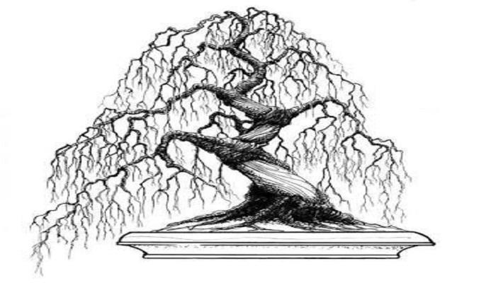 bonsai dibujo en tinta