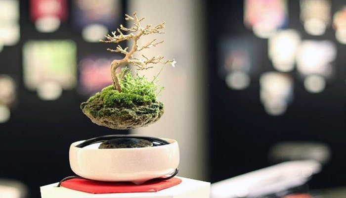 como funciona el air bonsai