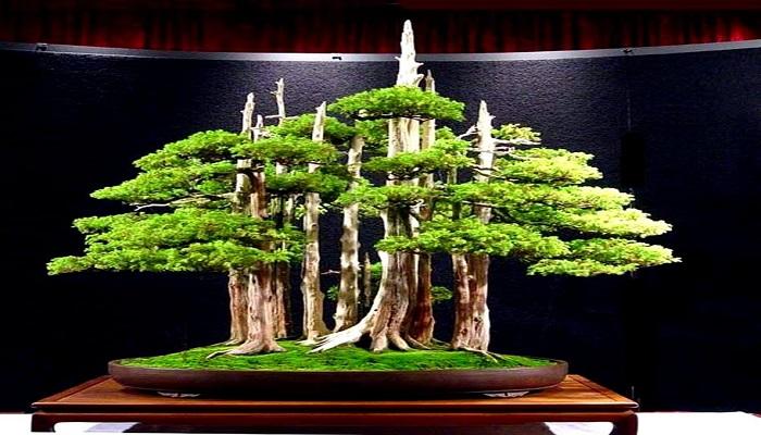 como hacer un bosque bonsai