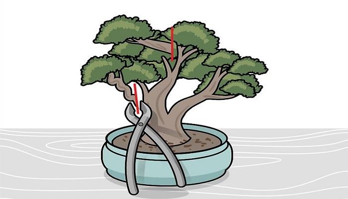 como podar bonsai