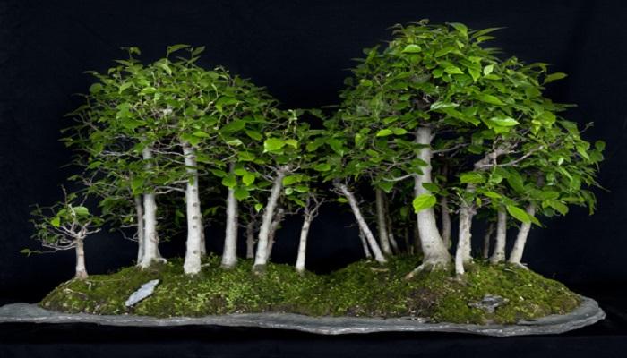 el bosque bonsai