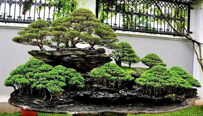 que especies usar para el bosque bonsai