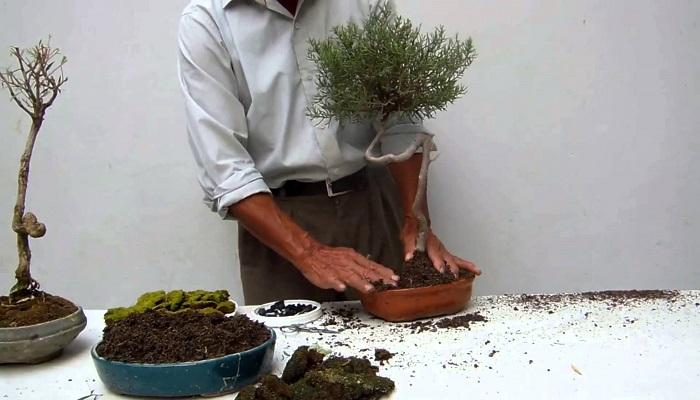 tierra para bonsai